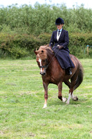 Class 113 Side Saddle Riding Club Horse or Pony