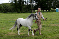 Class 78 Welsh Cob Registered in W.S.B. Section AStallion 4 years old or over