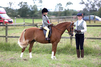 Championship Mini Show Hunter Pony