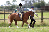 Class 16 BSPS Lead Rein Pony of Hunter Type