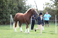 Class 10 Novice Horse – 1st year of showing
